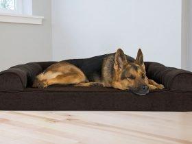 cuccia per cani da interno