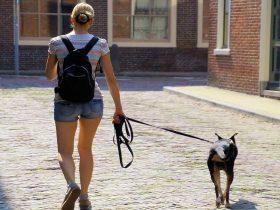 guinzaglio per cane