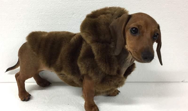 cappotto per cane