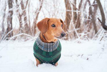 cappotto per cani